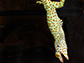 photo of a tokay gecko clinging to a smooth surface