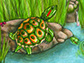new species of fossil turtle, Trachemys haugrudi