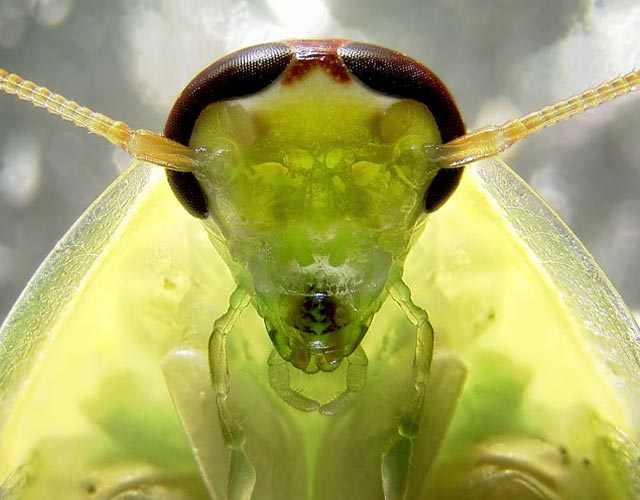 Cockroach Portrait