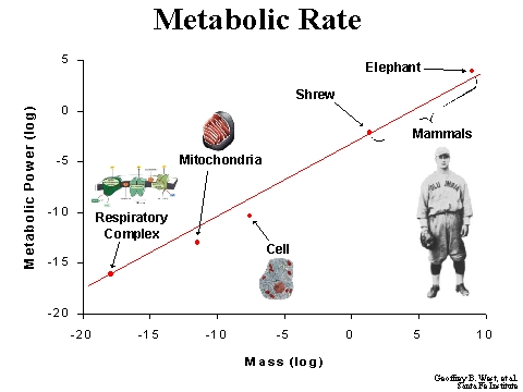 metabolic rate Your metabolism determines how many calories you burn each day  it  increases your metabolic rate by 15–30%, compared to 5–10% for.