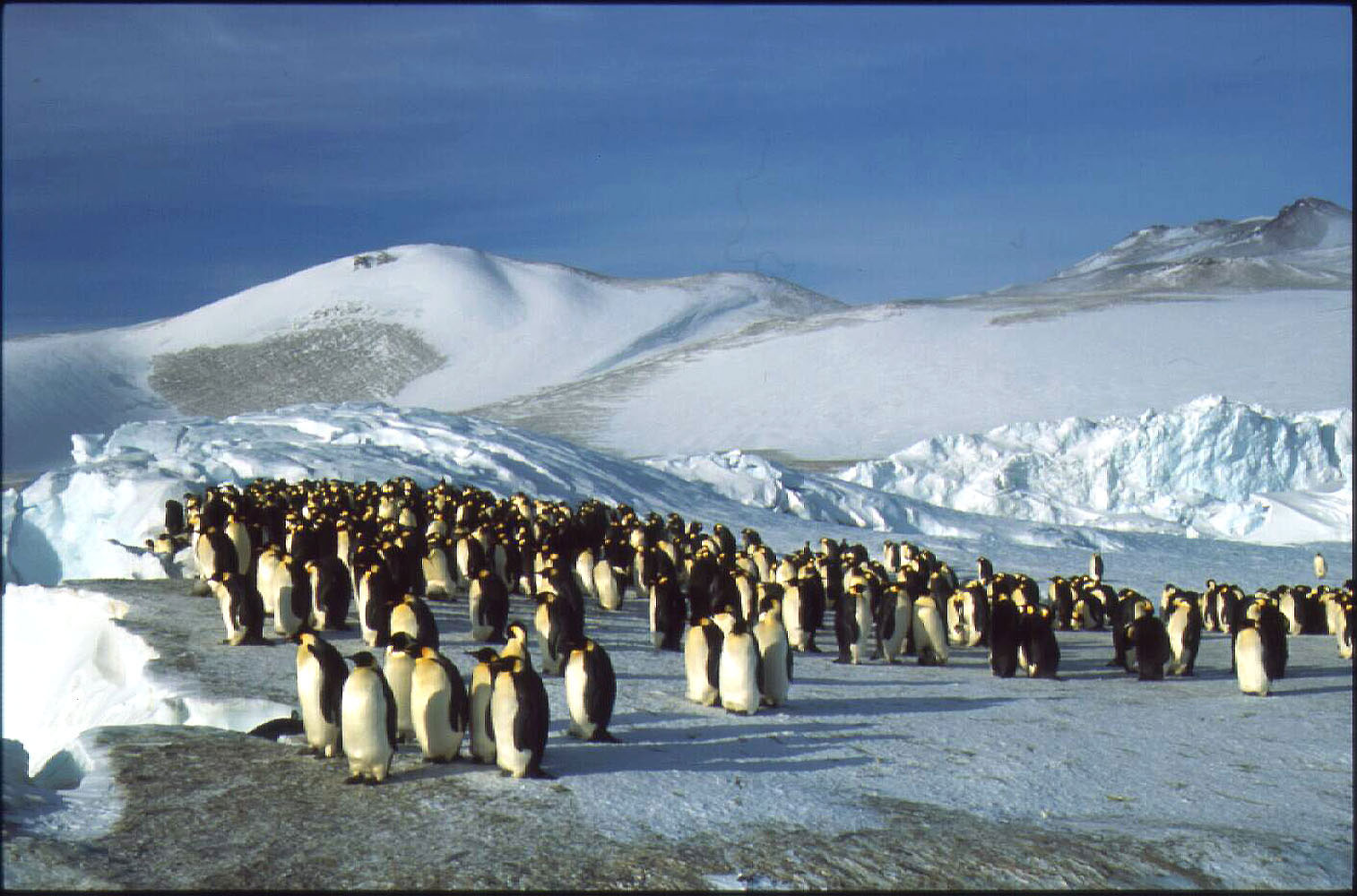 penguins and their habitat